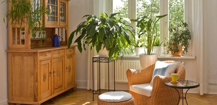 Purificare gli ambienti domestici con l aiuto delle piante erbario della salute - Piante da tenere in casa ...
